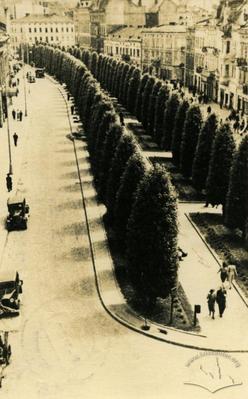 Poplar alley in Akademichna street (Shevchenka avenue now)