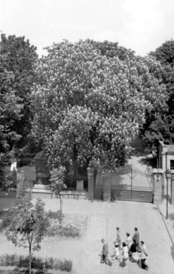 Kostia Levystkoho Street (1950s)