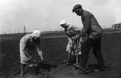 Workers planting potatoes