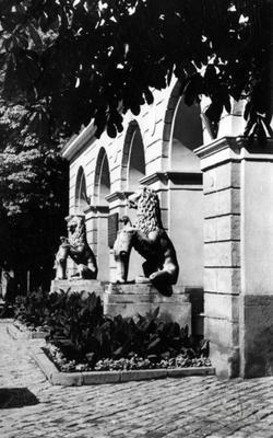 Леви біля головного входу до львівської ратуші