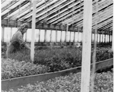 Growing Under Glass: Greenhouses