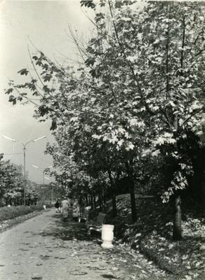 """Alley in """"Druzhba"""" park"""