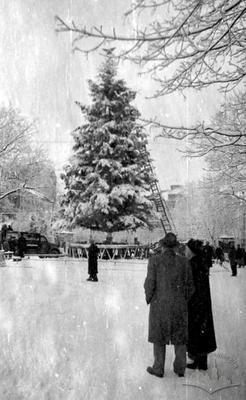 New Year's Tree in Svobody Boulevard