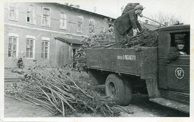 Delivery of saplings for planting at the factory