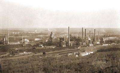 A panorama of the plant